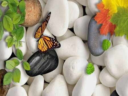 Rocky landing - rocks, landing, butterfly, Monarch