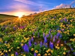 Colorful Flower Field