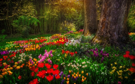 Park with spring flowers - pretty, forest, colorful, spring, park, trees, carpet, beauitiful, summer, flowers, walk, tulips, alley