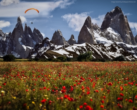 Poppies Field in  Switzerland - poppies, meadow, clouds, mountains, field, nature
