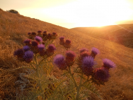 summer flowers - flowers, landscape, summer, sunset