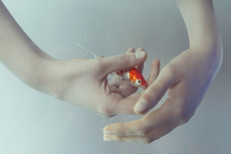 Origin - underwater, orange, fish, golden, summer, hand, origin, marta bevacqua