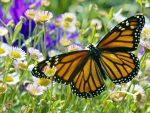 Monarch Butterfly in a Daisy Field