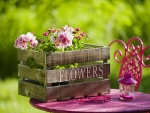 Garden flowers in crate