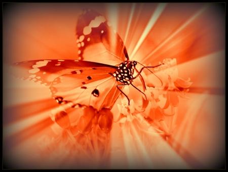 Aninimal Book: Orange Butterfly - Butterflies & Animals Background ...