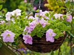 Basket with garden flowers