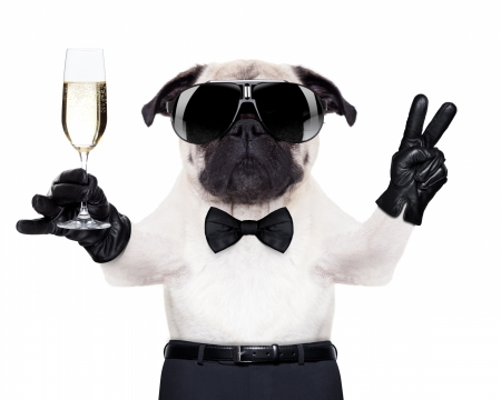 Funny dog - caine, black, bow, animal, cute, glass, glove, sunglases, funny, white, puppy, dog