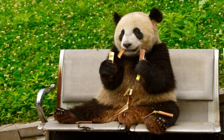 Panda bear - panda, cute, green, food, bear, black, white, animal