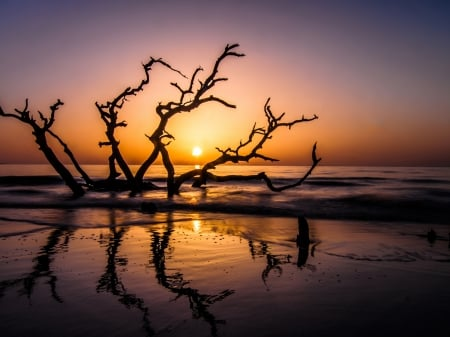 Sea Sunset - driftwood, beach, nature, sunset, island, sea