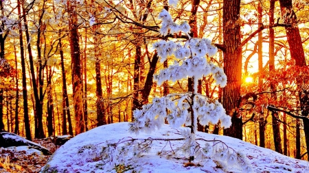 Sunlight at the End of Winter - forest, sunlights, snow, nature, trees, winter