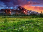 Mountain meadow
