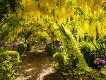 Park Tunnel of Yellow Tree Flowers