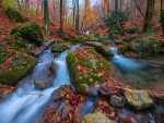 Autumn Rocky Forest Stream