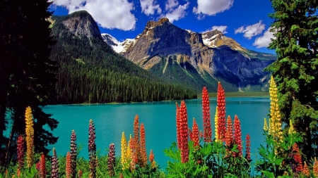 Clouds Over the Mountain - mountain, riverbank, shore, flowers, nature, lake