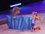 Final circus performance for a kangaroo