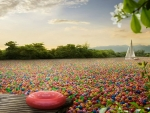 The sea of candies