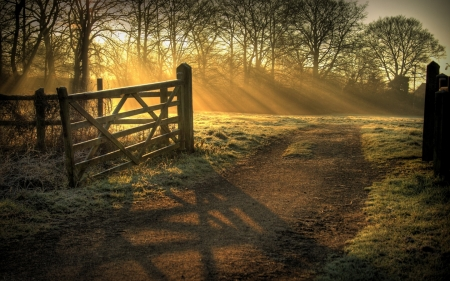Morning rays - Sun, Path, Gate, Field, Rays
