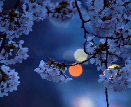 Mystic Moon - Sky & Nature Background Wallpapers on Desktop Nexus