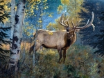 September Song - Elk F
