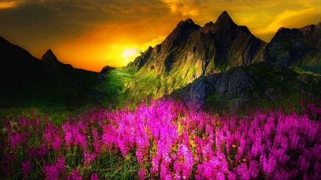 Spring Meadow - lupins, yellow, sunset, spring, sky, cliffs, mountains, fuschia, flowers, nature, sunshine