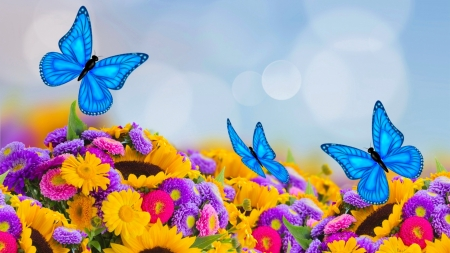 Flower and butterflies - pretty, lovely, butterflies, floral, colorful, flowers, beautiful, summer