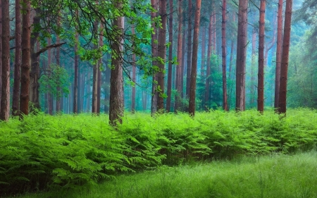 Gorgeous Green Fern Forest - Green, Trees, Naature, Fern, Forests