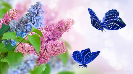 Spring Perfection - fragrant, lilacs, Firefox Persona theme, spring, butterfly, nature, bright