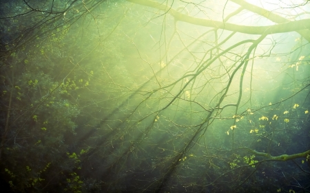Another day begins in the forest - image, sun, grass, beautiful, trunks, beautiful day, picture, photography, nice, green, beauty, sun rays, morning, sunbeam, amazing, photo, forest, view, clear, colors, trees, leaf, cool, plants, awesome, day, garden, nature, natural