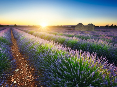 Sea of Lavenders - summer, nature, sunset, lavender, field