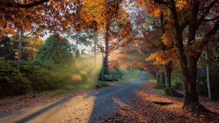 Country road - beautyiful, forest, autumn, silhouettes, leaves, shadows, nature, backgrounds, road, light