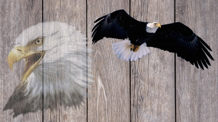 Eagle Freedom - rustic, eagles, Independence Day, birds, freedom, barn board, 4th of July, patriot