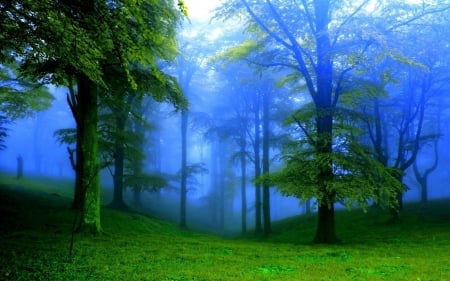 Soft Misty Green Forest - Trees, Green, Forests, Fog, Nature, Mist