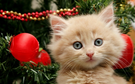 Kitten - red, kitten, animals, Cat