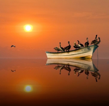 Sailing - sunset, boat, ocean, Birds