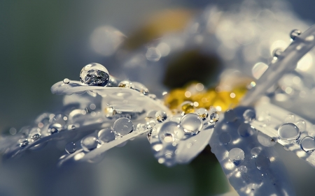 Daisy - dew, yellow, macro, water drops, summer, flower, petals, skin, white, daisy