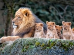 King and His Cubs