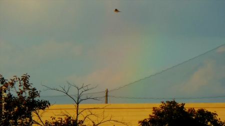 Rainbow & Bird - cloudy, cie1, Michigan, co1orful, rainbow, trees, overcast, clouds, wires, building, rainbows, bird, rain, co1ors