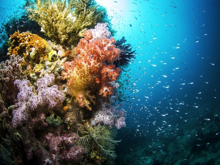 Colorful Coral & Sealife - Fish, Coral Reefs, Sealife, Oceans, Colorful, Underwater, Nature