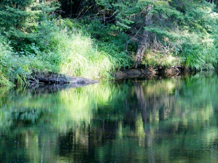 River Of Green Reflections - Summer, Reflections, Grass, Green, Nature, Photography, River