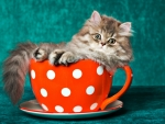Cat in a teacup
