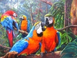Macaws in Forest