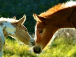 Best Friends - Horses F