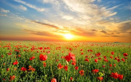 Flower field - Fields & Nature Background Wallpapers on Desktop Nexus  (Image 2277686)