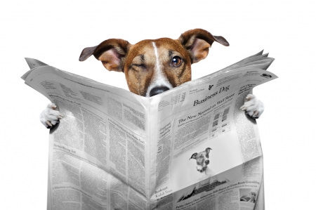 The spy - news, caine, spy, animal, jack russell terrier, funny, paper, white, eyes, dog