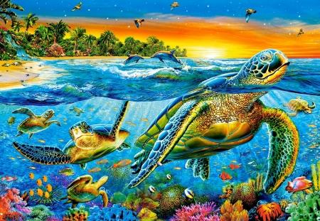 Underwater Turtles Other Abstract Background Wallpapers On Desktop Nexus Image 2277961