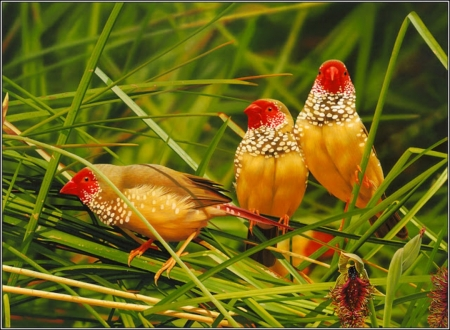 pretty birds - birds, pretty, grass, wallpaper
