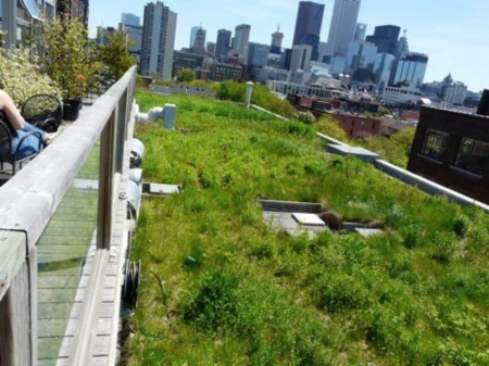 Grass Roofs - Greeen Roofs, Canada, Green, Grass, Nature
