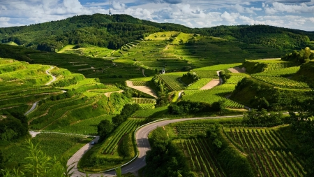 Village nature - Road, Crops, Green, Fields, Cultivation