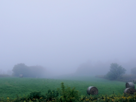 Field Of Fog - Grass, Nature, Fog, Photography, Field, Hay