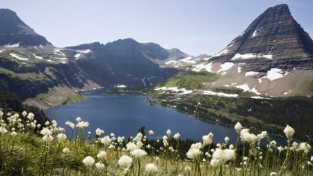Mountains and lake, British Columbia, Canada - White flowers, British Columbia, Canada, Mountains, Lake